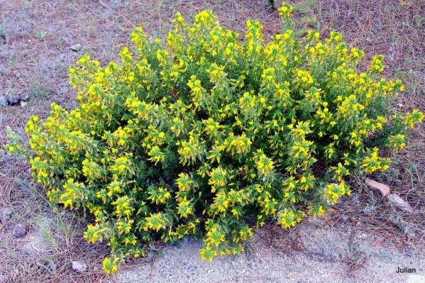 AX03---Fleurs-jaunes.JPG