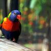 Magnifiques couleurs - Photo : Edgar