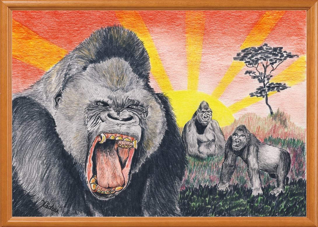 Dessin les Gorilles, de la famille des Hominidés (Gorilla) Hominidae