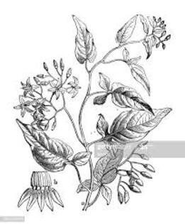 Le Phytophage