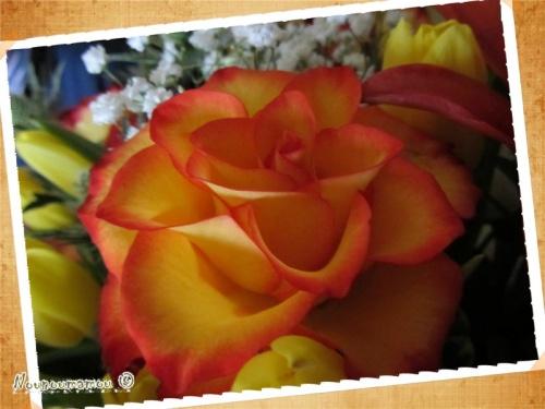 Quelques fleurs pour appeler le printemps !!!