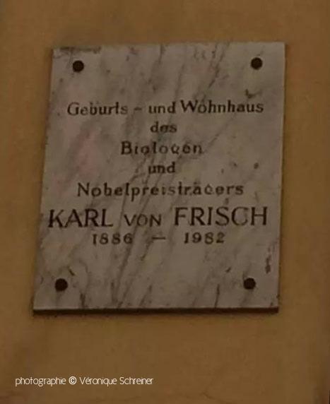 Karl von FRISCH by Tania Munz