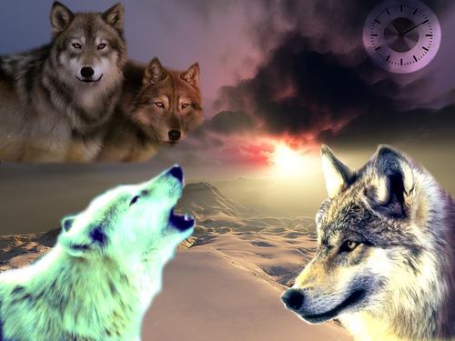 Loups 05