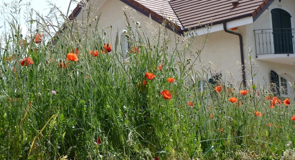 cet été  en Haute-Savoie