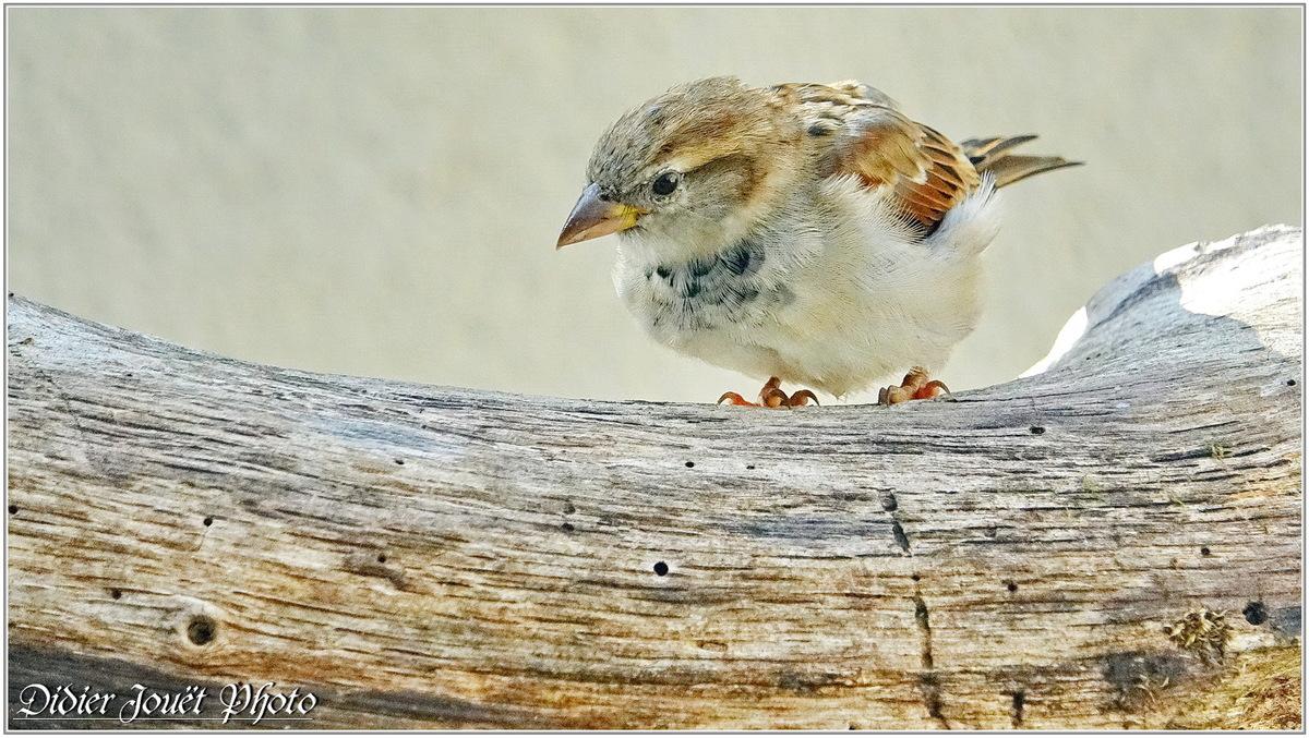 Méli-Mélo (29) - Oiseaux