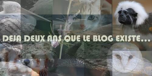 {évènementiel} Les 2 ans du blog : retour en arrière & concours n°2.