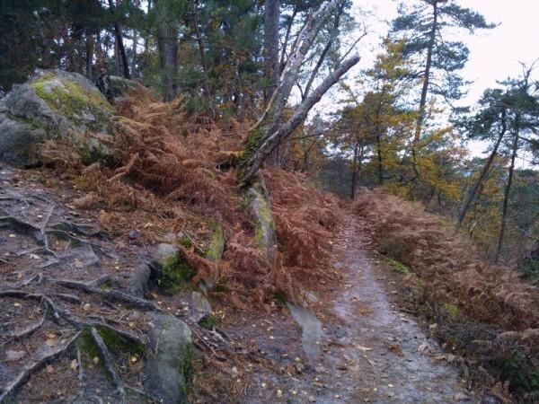 Sentier-Denecourt-16.jpg