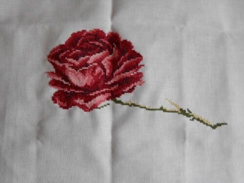 Etude botanique de la rose