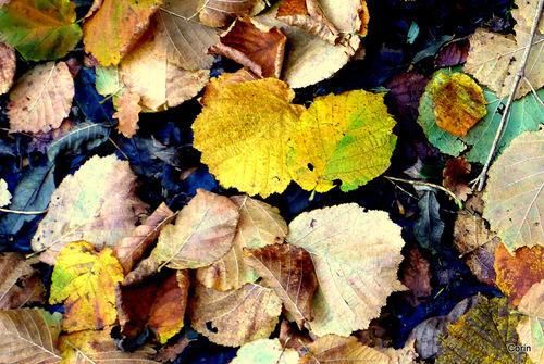 Fougère et feuilles !