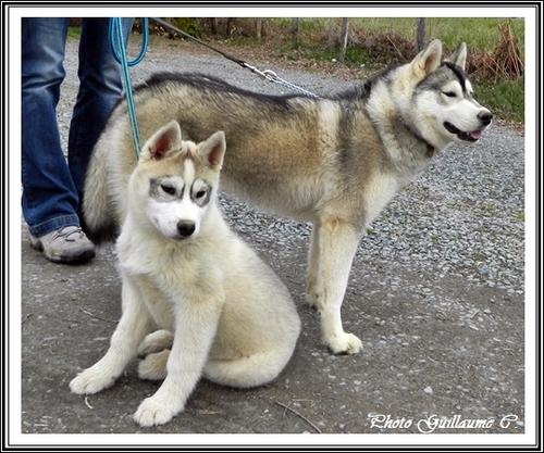 Ianko (3 mois)