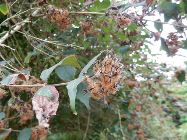 L'automne au jardin botanique de Meise