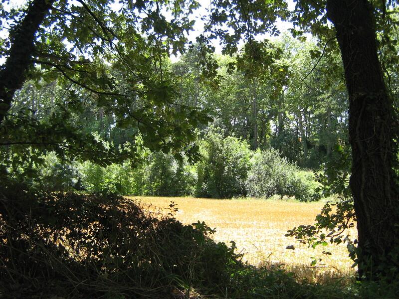 Une balade ombragée en été : la Rigole