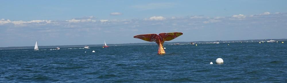 La queue de la baleine à Arcachon - été 2019...