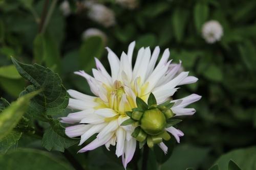 Petit tour de floraisons vers le fond du jardin