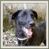 Dolly 1