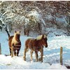 chevaux dans le jura