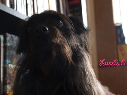 Lulu !