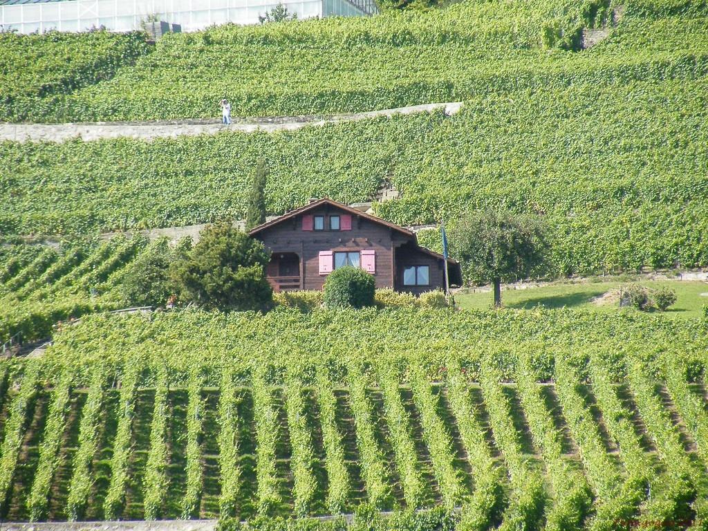 Les vignes de Lavaud