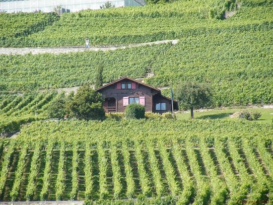 suisse été 2011_journée cgn_sur le henri dunant (75)