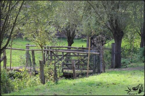 Les jardins d'Aywiers, un samedi d' automne 2015