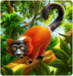 red_ruffed_lemur
