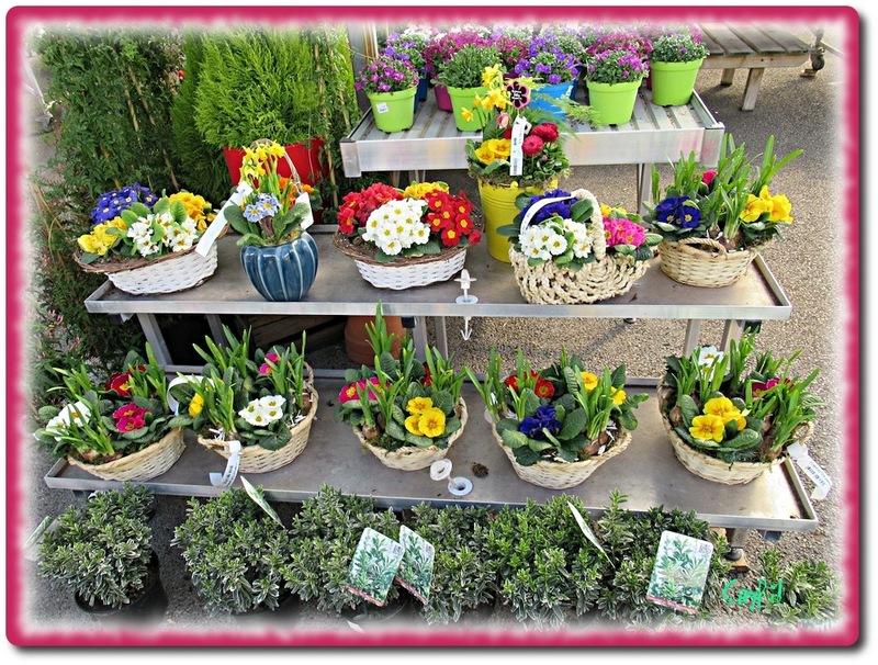 A la jardinerie...