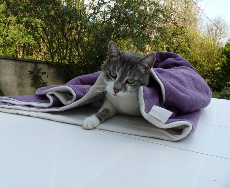 La belle vie des chats