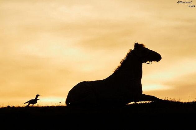 Le cheval et l'oiseau