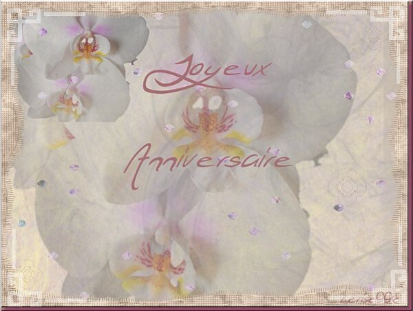 les-orchidees.jpg