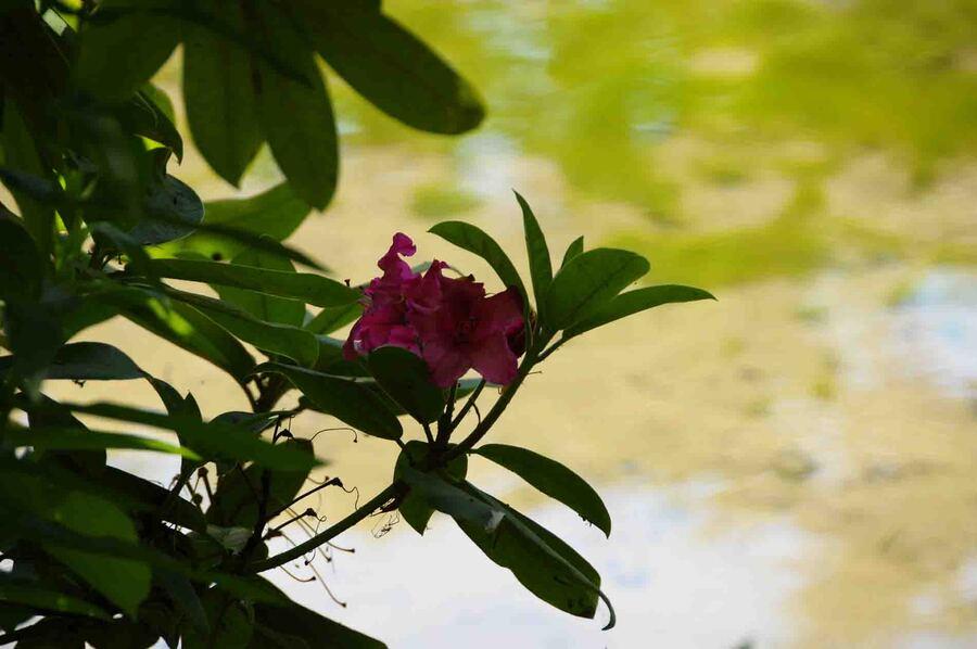 « Le Parc floral Court d'Aron 4 »