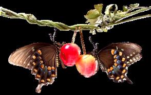 ♥ Les papillons ♥