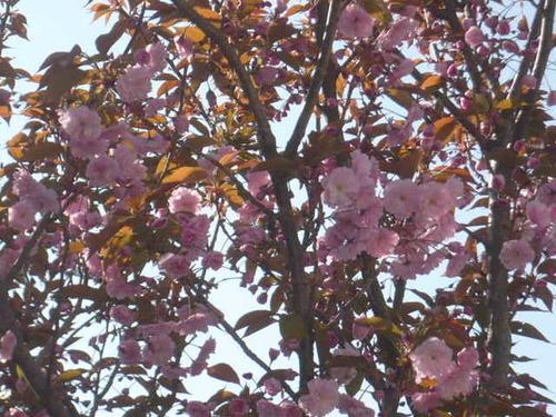les petites fleurs du moment ....