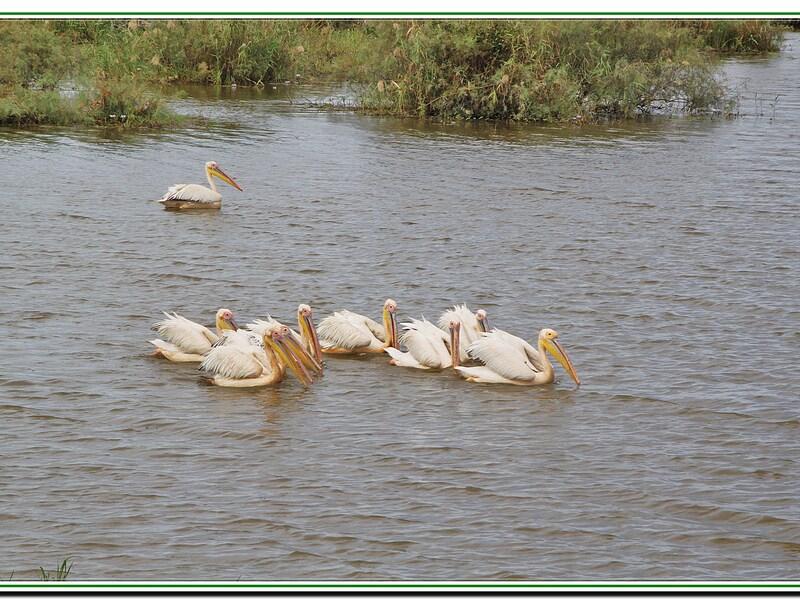 La reserve des Djoudjs