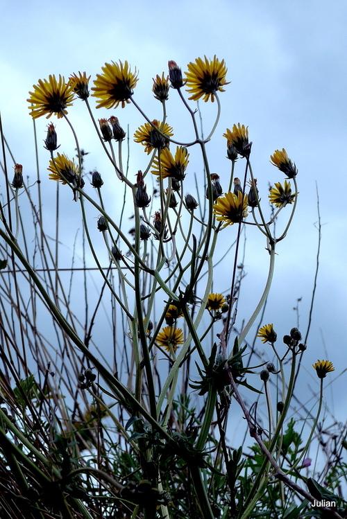 Fleurs sauvages jaunes