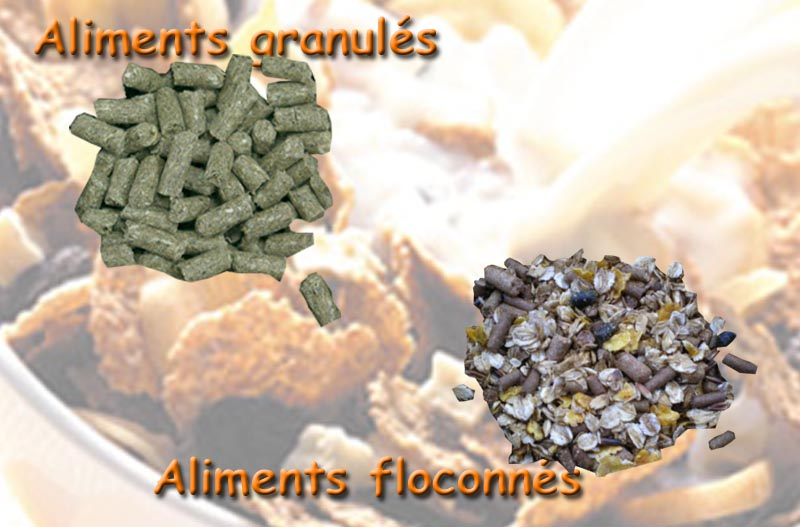 Les aliments complets