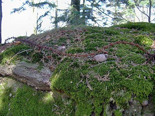 roche pierre piquee neuvevoie derzognier 011