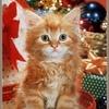 Chat dans boîte à cadeau