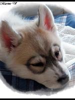 Jaïa (2 mois)