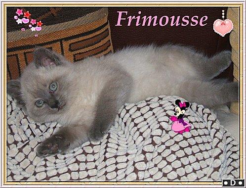 frimousse-022.JPG