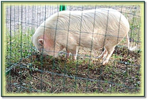 animaux-ferme-1.jpeg