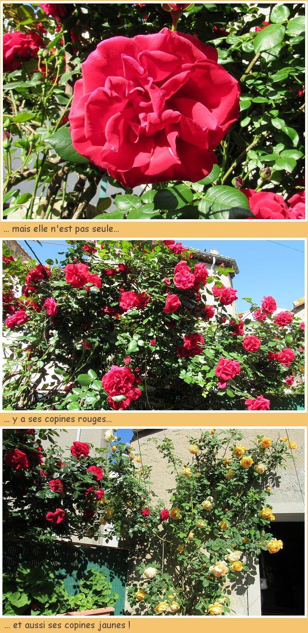Le plein de roses siouplaît !