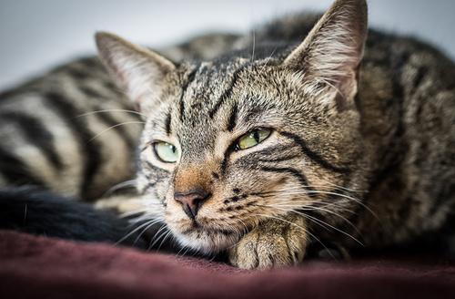 Chat petit fauve