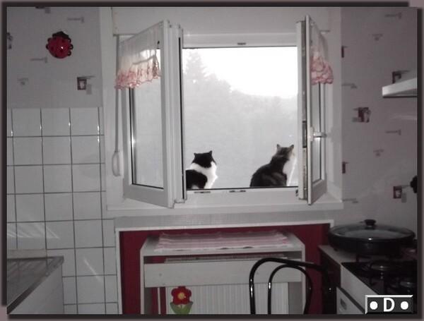 Chats à la fenêtre ....