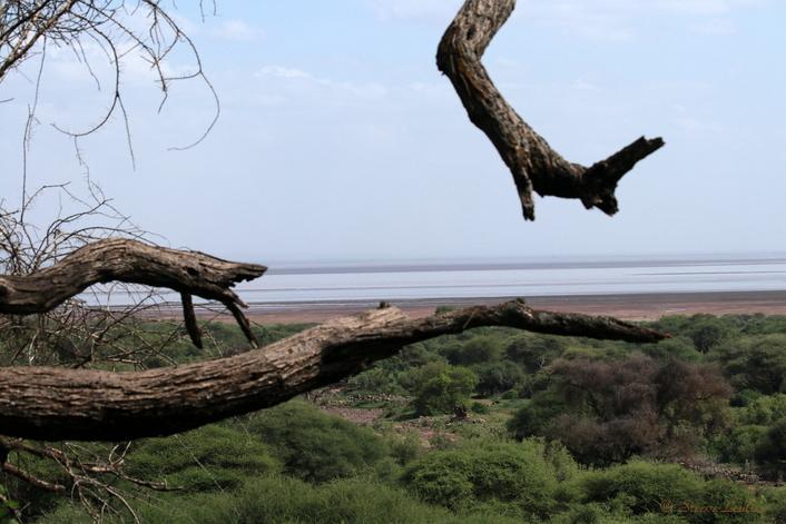 Lac de Manyara