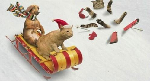 Les bijoux chat