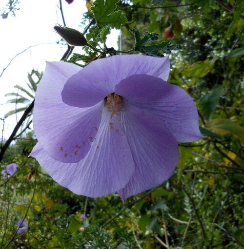 Floraisons violettes du mois de mars