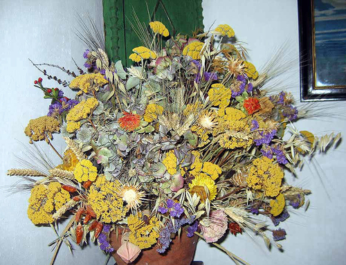 Jardin sur cour et fleurs séchées