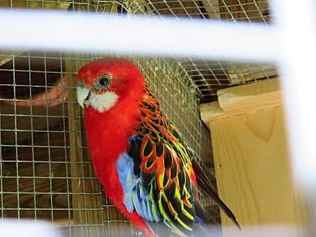 les-oiseaux-et-autres-volatiles-0120.JPG