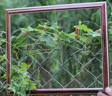 jardin-d-aout 7712
