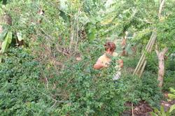 fruits de Tival cerise cayenne